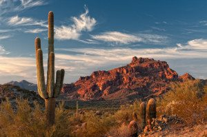 Red Mountain and Saguaro Cactus